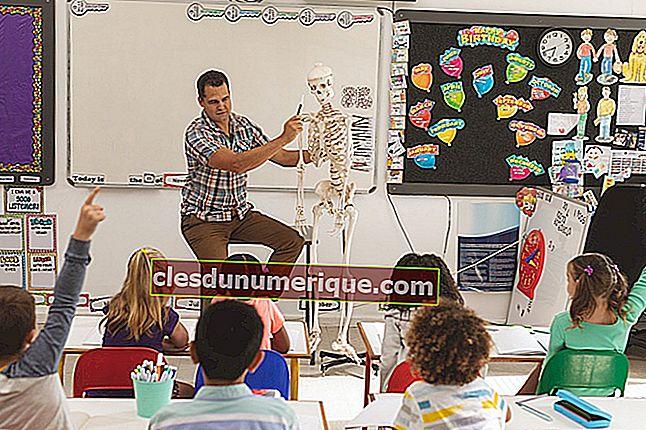 Conozca la estructura del esqueleto humano y sus funciones.