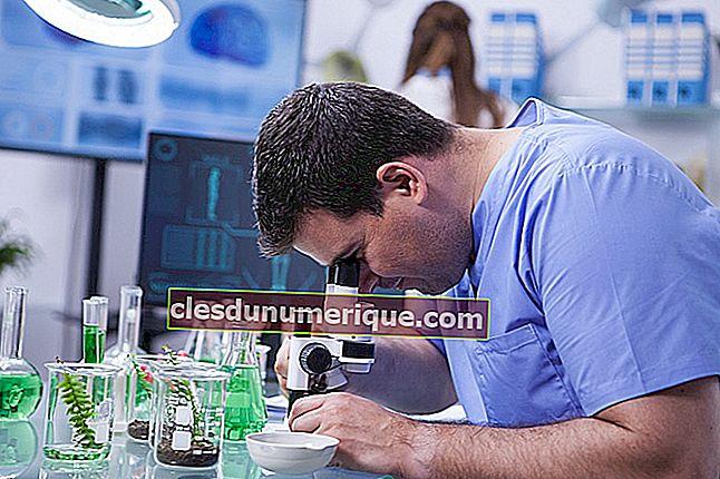 Aplicación de la biotecnología en la vida cotidiana