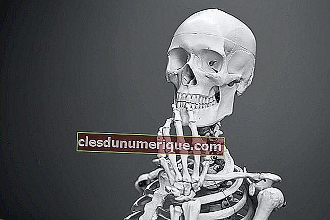 Il est temps d'apprendre à connaître les parties des os humains