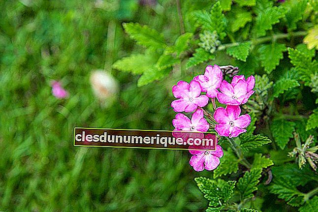 Répartition de la flore et de la faune dans le monde