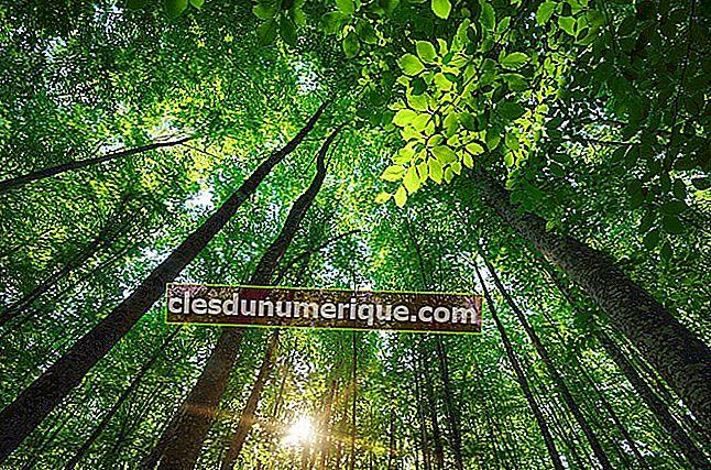 A importância de comemorar o Dia Mundial da Árvore