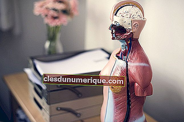 Sistema de excreción en humanos, ¿qué función de los órganos?