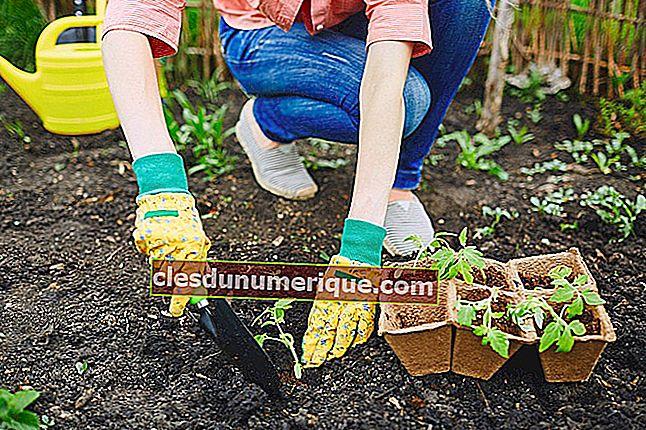 Le rôle des sols et des organismes du sol pour la durabilité