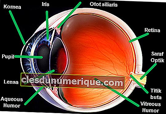 Connaître l'œil humain, de l'extérieur vers l'intérieur