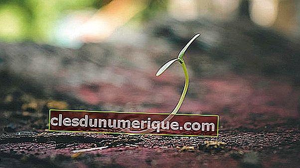 Bitkilerde Birincil ve İkincil Büyüme Nedir?