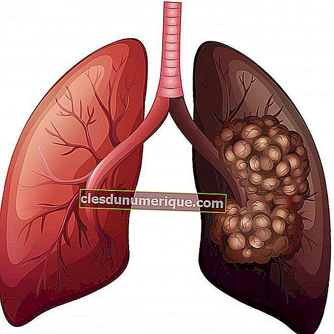 Le rôle des poumons dans le système excréteur humain
